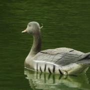 L'Oie rieuse en navigation