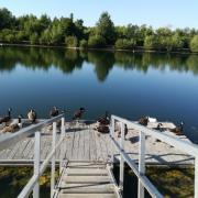 Le ponton squaté par des visiteurs à plume