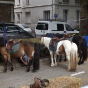 Les poneys du centre hippique