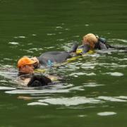 Sauvetage d'une personne en détresse par un chien Terre-Neuve