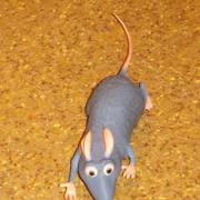 Visite surprise de Ratatouille